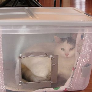 Easy to make cat shelter idea