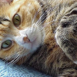 Picture of the Month Contest - Your Favorite Cat Photo - September 2014