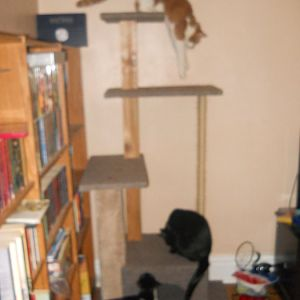Home-made cat-towers