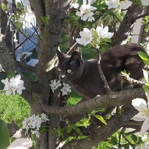 Springtime Kitties! April 2016 Picture Of The Month Contest!