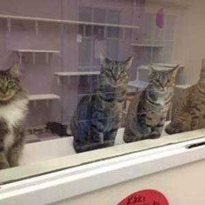 The Cats at our Shelter