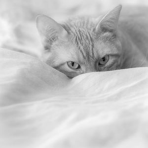 Cats in Black and White (B&W photos)