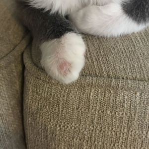 Whats wrong with my kittens paw?
