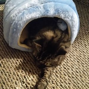 Submit your picture of your cat inside... anything! Picture Of The Month September 2016