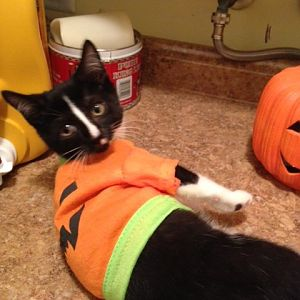 Happy Halloween from Smedley!