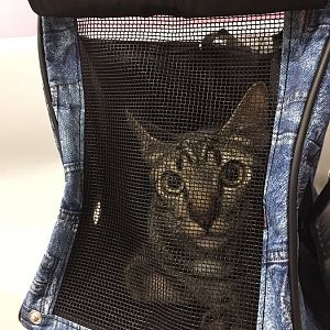 Ideal size for soft cat carrier?