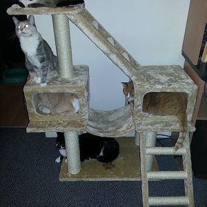 kitty tree.jpg