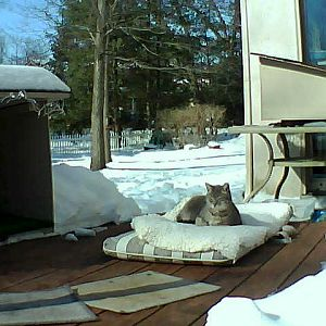 Shadow on the deck in 14 degree weather Feb 11 201