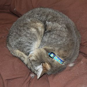 "A ""circular"" cat could mean the room is too cold."