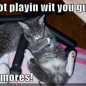 funny-pictures-angry-grey-cat-sulks - playing no m