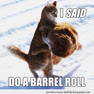 funny-do-barrel-roll-cats-fighting-snow-pics.jpg