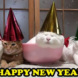 HAPPY-NEW-YEAR-CATS-in-cute-kitty-hats.jpg
