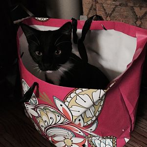 FullSizeRende - Domino in a gift bag.jpg