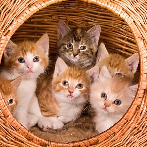 kittens in a basket.jpg
