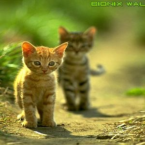 Bionix Wallpaper - Green cats - Tile example (Copy