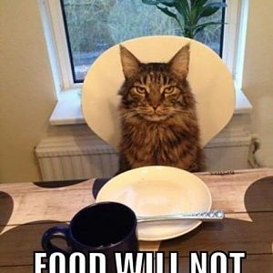 funny-picture-cat-food-human.jpg