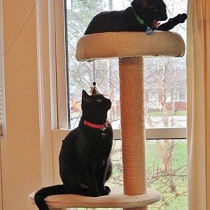 cats on cat tree.JPG