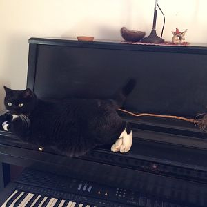 Bonnie on neighbor Melissa's piano.jpg