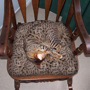 cat-camouflage-chair-r-default (1).jpg
