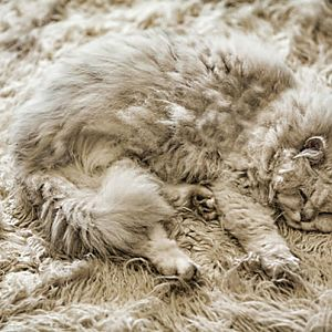 cat-carpet-look-alike-r-default.jpg
