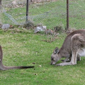 mummy & baby Eastern Grey.jpg