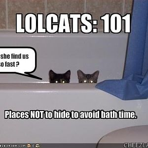 catslave1-101_bath_time.jpg