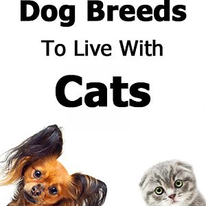 Best and Worst Dog Breed to Live with Cats