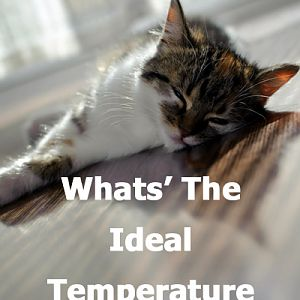 What's the ideas temperature for a cat?