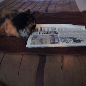 Who says cats can't read?