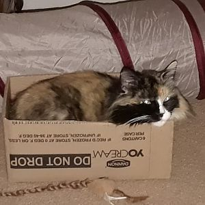 Lulu needs a bigger box!