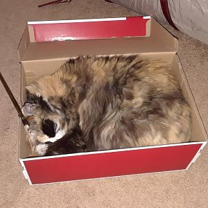 Schnoozin' in the shoe box...