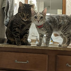 Barry and Paisley on Sink