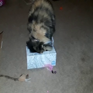 Lulu and the Kleenex box.mp4
