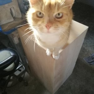Wooden box cat