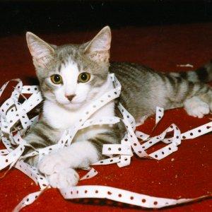 K.C.  Kitten