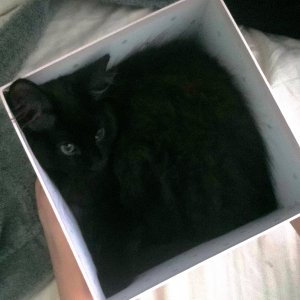 Pooby in a box!