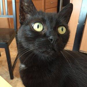 Kiko gaze