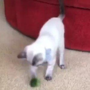 Coco Battling Broccoli