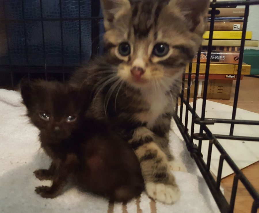5 Week Old Kitten Looks Like She S Only 2 Weeks Old Thecatsite