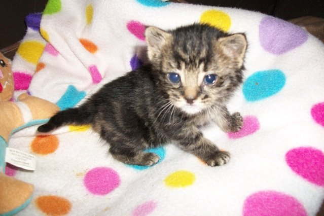 3 Week Old Kitten And Updates Thecatsite
