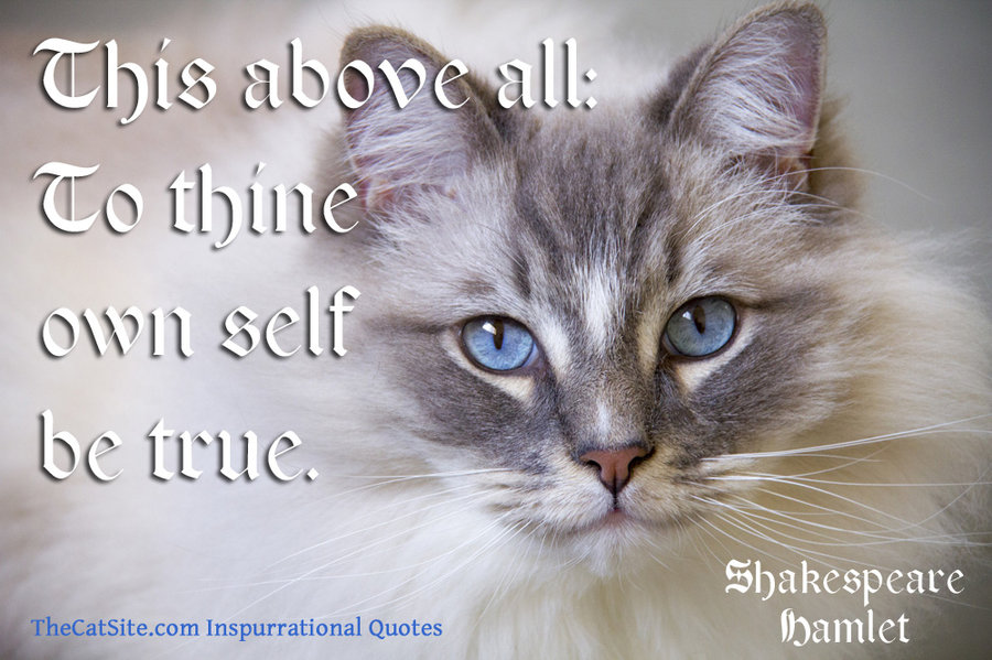 7 Shakespeare Quotes Matched Up With Beautiful Cat Pictures Thecatsite