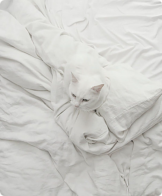 camouflage-white-cat-in-white-sheets-r-default.jpg