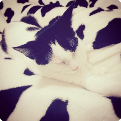 cat-camouflage-black-and-white-r-default.jpg