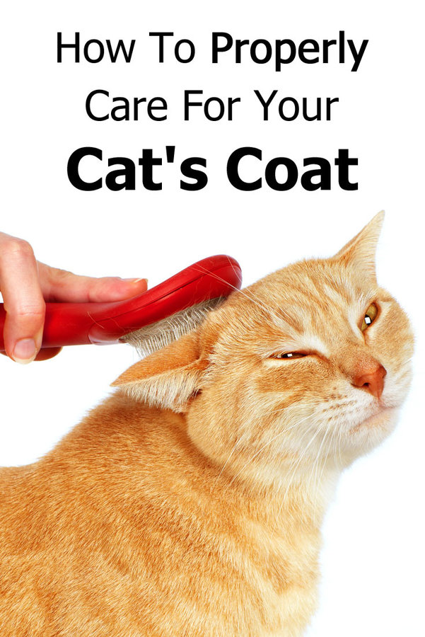 cat-coat-care.jpg