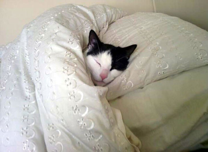 Image result for cat sleeping on human mattress