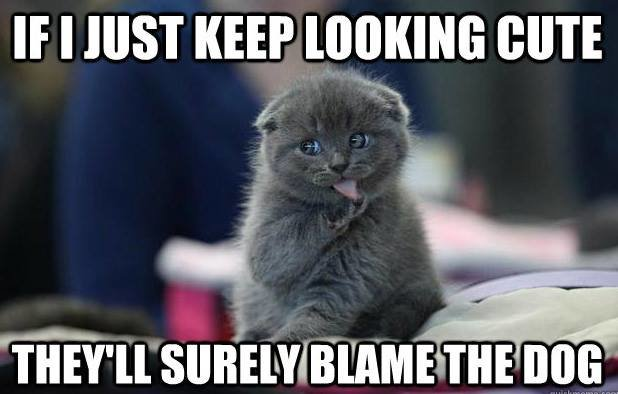 cat-meme-006-blame-the-dog.jpg