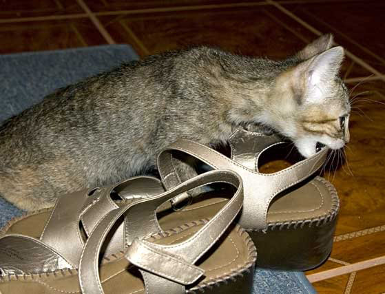 cat with sandals.jpg