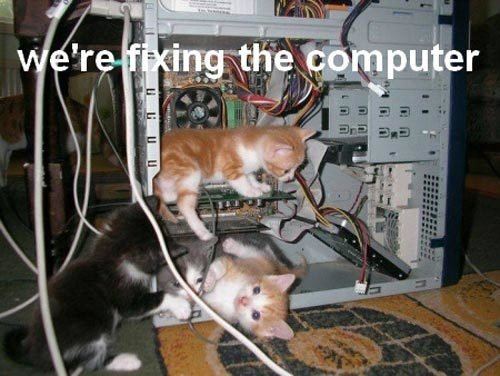 Post funny picture and memes here page 37 the cat site cats fixing computer 251111g sciox Image collections