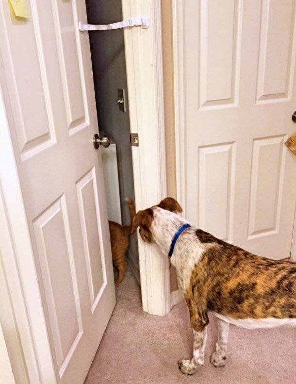 Door Buddy Review.jpg & Interior door prop for cats | TheCatSite