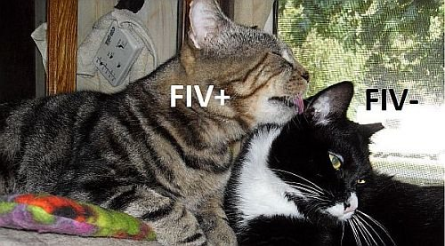 FIV- Billy FIV+ Chumley cover Laurie.jpg